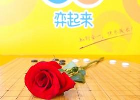 520弈起来行动——当围棋遇上玫瑰